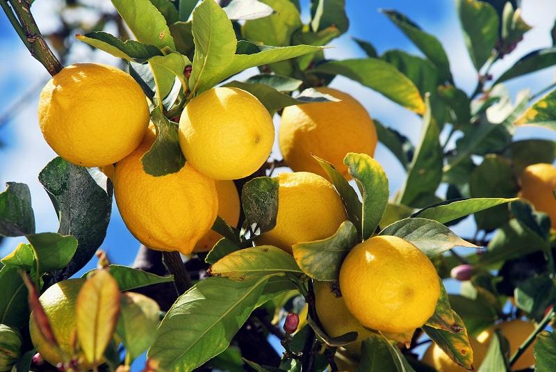 sagra-del-limone-monterosso-2